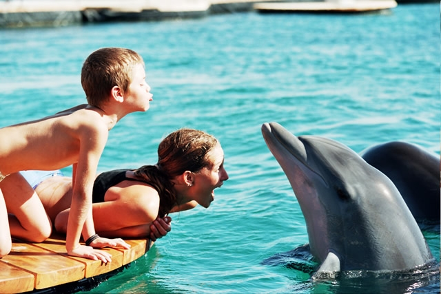 01-ריף הדולפינים