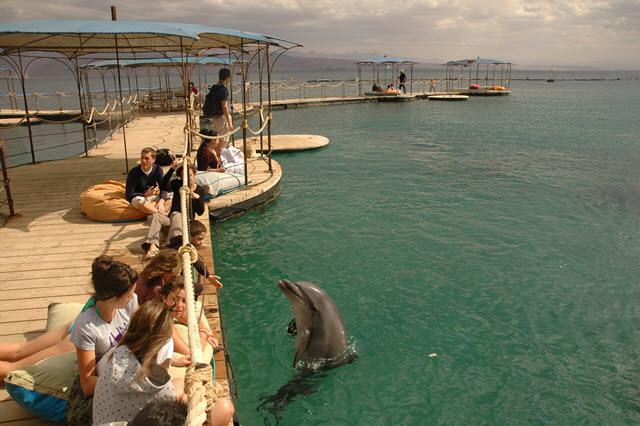 02-ריף הדולפינים