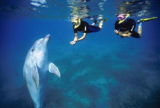 03-ריף הדולפינים