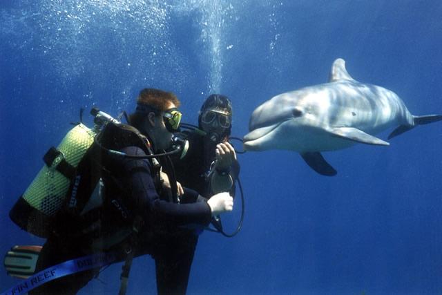 04-ריף הדולפינים